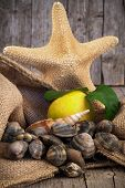 Still Life With Clams And Starfish