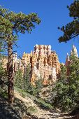 pic of hoodoo  - Hoodoos on Mossy Creek Trail in Bryce Canyon - JPG