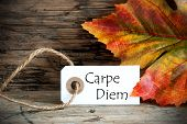 Autumn Label With Carpe Diem