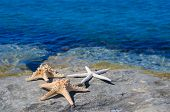 Three Starfishes Next To Sea