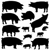 Set of illustrated silhouettes of pigs and piglets