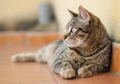 Cat Looking Aside In The Soil Of A Terrace