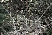 picture of suicide  - Infamous Aokigahara forest in Fuji - JPG