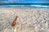 Bottle On The Sand