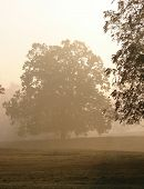 Tree and Meadow in Fog