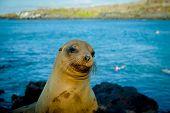 closeup portrait of sea lion's face galapagos islands