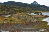 picture of darwin  - Wulaia Bay located on Navarino Island on the Chilean side of the Beagle Channel in Patagonia - JPG