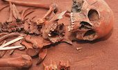 stock photo of exhumed  - Skeleton remains of a buried unknown victim - JPG
