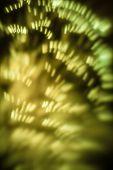 Golden Sparkle Texture