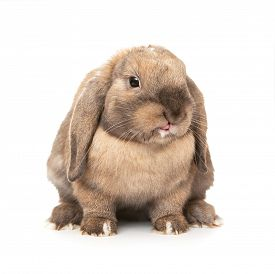 picture of dwarf rabbit  - Rabbit puts out one - JPG