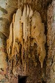 picture of bee-hive  - A large bee hive on a brick wall  - JPG