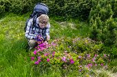 stock photo of rare flowers  - Young tourist takes pictures of flowers rhododendron Carpathian - JPG