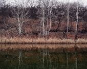 picture of early morning  - landscape river and trees without leaves on the shores of morning in early winter - JPG