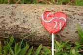 picture of valentine candy  - Candy valentines hearts on timber at the park - JPG