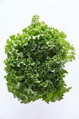stock photo of leafy  - Above head shot of newly Harvested fresh crispy leafy green lettuce isolated on white perfect healthy salad ingredient and garnish - JPG
