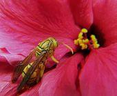 image of mayfly  - macro photo  - JPG