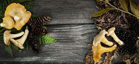 picture of chanterelle mushroom  - chanterelle mushrooms - JPG