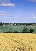 View Across Cornfield Agricultural Landscape