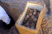 Turtle Egg Conservation