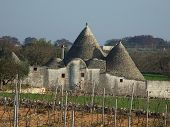 Vineyard Trullo