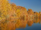 Gold Reflexionen und Blauer See