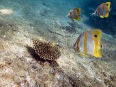 coralfish