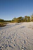 Footprints On Sand 1