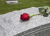 stock photo of condolence  - A single rose placed on a grave - JPG