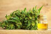 Cannabis Oil And Hemp poster