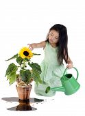 stock photo of unawares  - A young innocent child waters a plant with oil - JPG