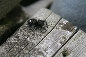 Spider On Dock