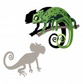 illustration with chameleon and its shadow on white background