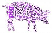 Wordcloud of pig