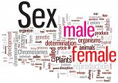 Sex word cloud illustration. Graphic tag collection.