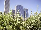 City Buildings With Tall Wild Grass In Summer poster