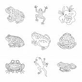 Isolated Object Of Amphibian And Animal Icon. Set Of Amphibian And Nature Stock Symbol For Web. poster