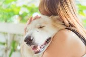 Woman Hugging Her Dog Friendly Pet Closeup Big Dog,happiness And Friendship. Pet And Woman. poster