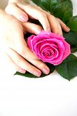 Beautiful Manicured Womans Nails With Pink Polish Isolated. Nails Care. Manicure, Pedicure Beauty S poster