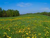 Prado de primavera