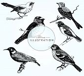 A Great Set Of Realistic Bird Sketches. Vector Bird Close-up. Beautiful Birds On A Branch poster