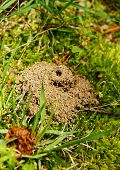 Anthill In The Grass