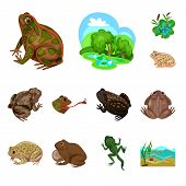 Vector Design Of Frog And Anuran Sign. Collection Of Frog And Animal Stock Symbol For Web. poster