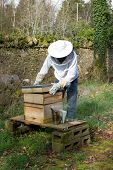 foto of bee keeping  - A man dressed in protective clothing lifts a lid off a bee hive with a smoker next to the hive - JPG
