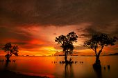 Mangrove trees and landscape sunset scene at Nirvana Beach, Padang, Sumatera Island, Indonesia. Take