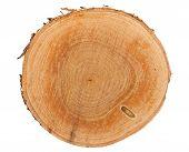 Tree Stump Top View
