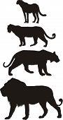 Predators, carnivorous big cats