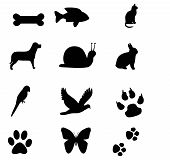 icon animals