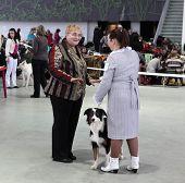 Women And Dog On Dog Show