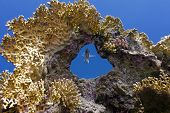 coral reef with great coral and single exotic fish