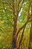 Moos bedeckte Baum im Regenwald